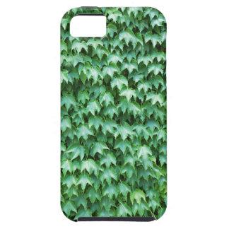 Grön murgröna iPhone 5 cases