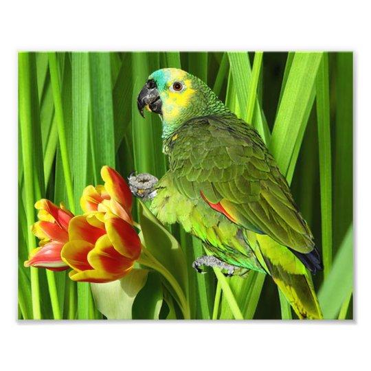 Grön natur med papegojan fototryck
