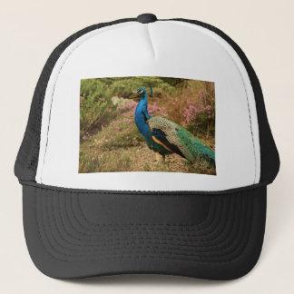 Grön och orange påfågel för blått keps