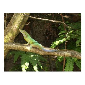 Grön ödla för jamaikan vykort