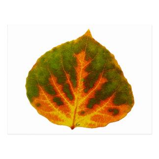 Grön orange & asp- löv #1 för gult vykort