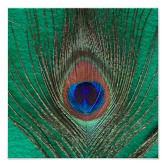 Grön påfågelfjäderaffisch poster