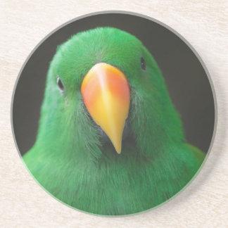 Grön papegoja underlägg sandsten