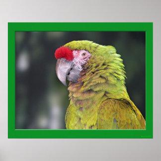 Grön papegojaaffisch poster