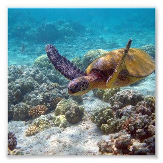 Grön sköldpadda fototryck