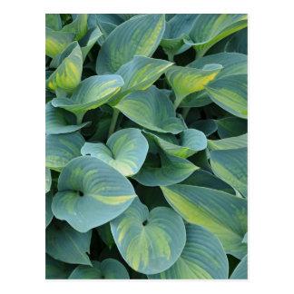 Grön vykort för hostaväxttryck