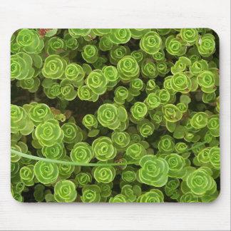 Gröna Sedum Mousepad 2 Musmatta