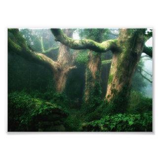 Grönskande skog fototryck