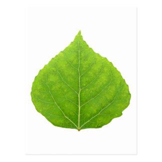 Grönt asp- löv #11 vykort