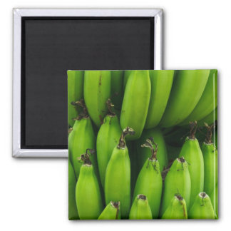 Grönt bananfruktmönster magnet