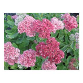 Grönt för rosor för växt för trädgård för vykort