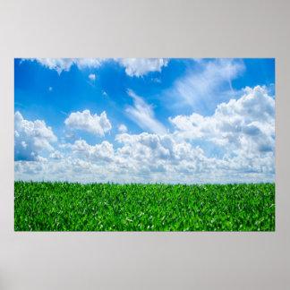 Grönt gräs och blå himmel poster