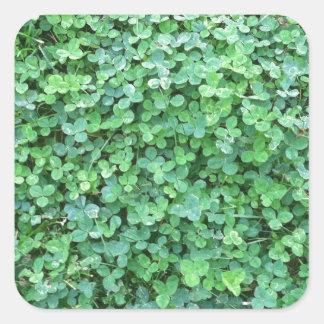 Grönt klövernaturfoto fyrkantigt klistermärke