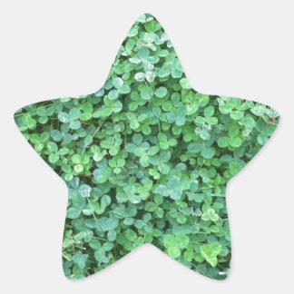 Grönt klövernaturfoto stjärnformat klistermärke