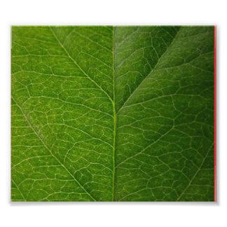 Grönt löv fotografiska tryck