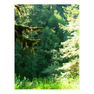Grönt och frodigt vykort
