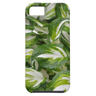 Grönt och vit görade randig hostalöv iPhone 5 Case-Mate skydd