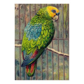 Grönt parakitertryck för vintage set av breda visitkort