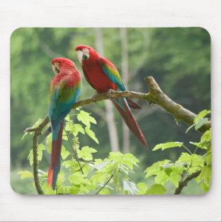Grönt-påskyndade Macaws Musmatta