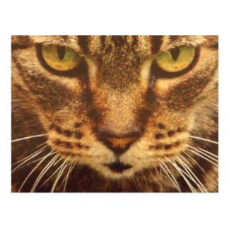 Grönt synat kattkort vykort