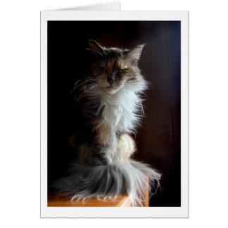 Grouchy värdig gammal katt hälsningskort