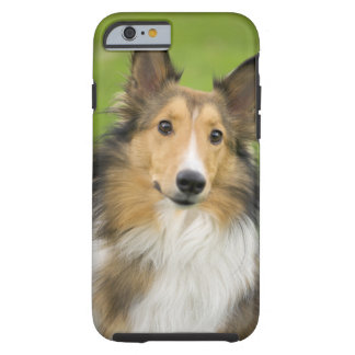 Grov Collie, hund, djur Tough iPhone 6 Case