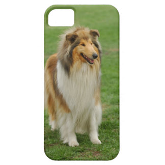 Grov Collie iPhone 5 Skal