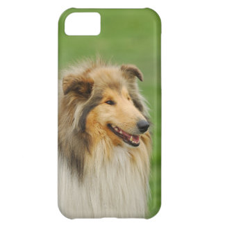 Grov Collie iPhone 5C Fodral