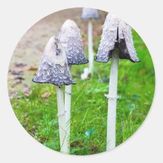 Gruppbläck plocka svamp nära skogvägen i nedgång runt klistermärke