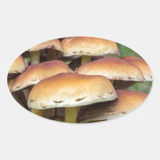 Gruppbruntet plocka svamp i nedgångskog ovalt klistermärke
