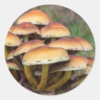 Gruppbruntet plocka svamp i nedgångskog runt klistermärke