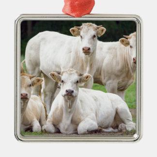 Gruppen av vitbeige skrämmer att posera i äng julgransprydnad metall