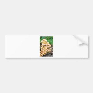 Grupporangegult plocka svamp i nedgångskog bildekal
