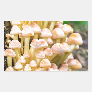 Grupporangegult plocka svamp i nedgångskog rektangulärt klistermärke