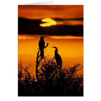 Gryning på Evergladesnationalparken - Anhingas Hälsningskort