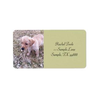 Gul adressetiketter för valp för Labrador Retrieve