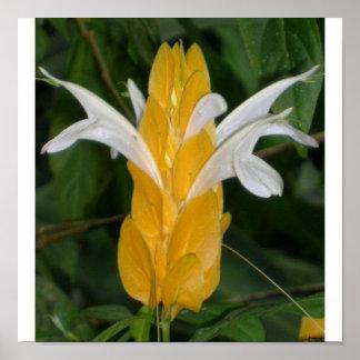 Gul blomma 1 poster