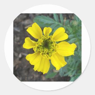 Gul blomma runt klistermärke