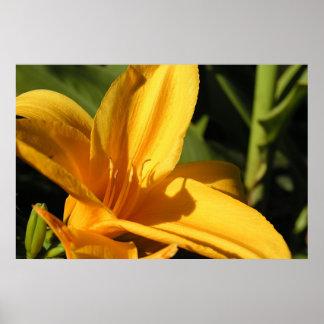 Gul blomma Sacramento PA120752 Poster