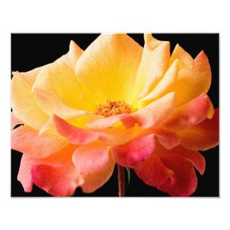 Gul blommigt för bakgrund för rosa rosblommasvart fototryck