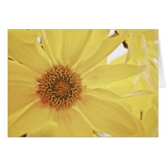 Gul Chrysanthemumblomma OBS Kort