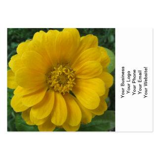 Gul guld- blomma för Zinnia Set Av Breda Visitkort
