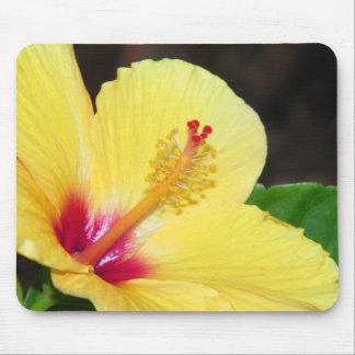Gul hibiskus Mousepad Musmatta