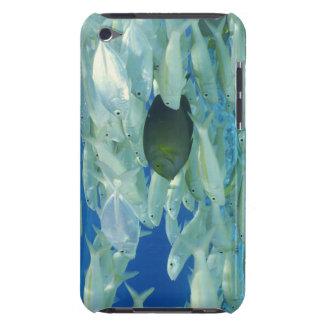 Gul kirurgfisk med gul randguldfisk iPod touch skal