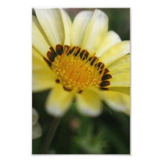 Gul konst för natur för tryck för blommamakrofotog fototryck