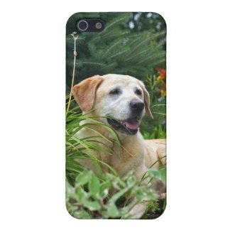 Gul Labrador Retriever i en blommagarden. iPhone 5 Fodral