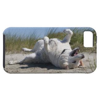 Gul Labrador Retriever iPhone 5 Case-Mate Skydd