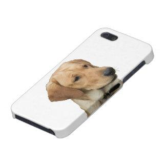 Gul Labrador Retriever iPhone 5 Cases