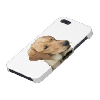Gul Labrador Retriever iPhone 5 Cover