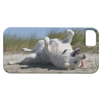 Gul Labrador Retriever iPhone 5 Skydd